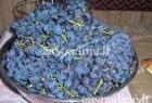 Naminių vynuogių kompotas žiemai